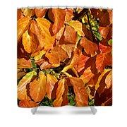 Autumn Leaves 82 Shower Curtain