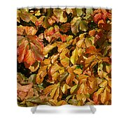 Autumn Leaves 83 Shower Curtain