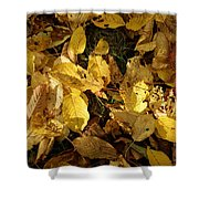 Autumn Leaves 95 Shower Curtain