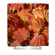 Autumn Leaves 98 Shower Curtain