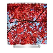 Autumn Leaves And Blue Sky Shower Curtain