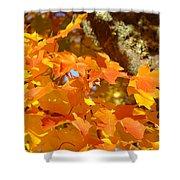 Autumn Leaves Art Print Yellow Orange Shower Curtain