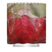 Autumn Leaves Blank Greeting Card Shower Curtain