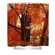 Autumn Leaves Shower Curtain by Carol Groenen