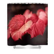 Autumn Leaves II Shower Curtain