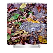 Autumn Leaves In Creek Bed Shower Curtain