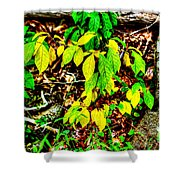 Autumn Leaves In Green And Yellow Shower Curtain