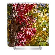 Autumn Leaves In Palo Duro Canyon 110213.97 Shower Curtain