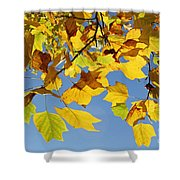 Autumn Leaves Of The Tulip Tree Shower Curtain