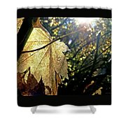 Autumn Light On Leaf Shower Curtain