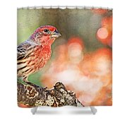 Autumn Male House Finch 1 Shower Curtain