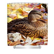 Autumn Mallard Shower Curtain