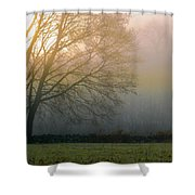 Autumn Maple At Dawn Shower Curtain
