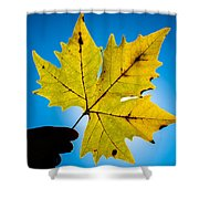 Autumn Maple Leaf In The Sun Shower Curtain