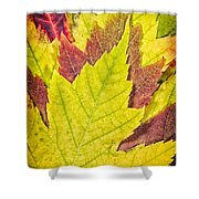 Autumn Maple Leaves Shower Curtain