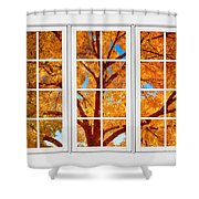 Autumn Maple Tree View Through A White Picture Window Frame Shower Curtain