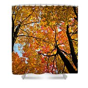 Autumn Maple Trees Shower Curtain by Elena Elisseeva