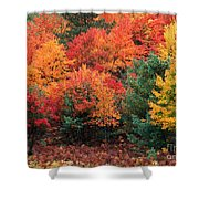 Autumn Maple Trees Shower Curtain