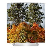Autumn Maple With Pines Shower Curtain