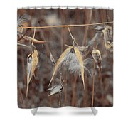 Autumn Milkweed Shower Curtain