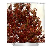 Autumn Oak On A Cloudy Day Shower Curtain