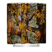 Autumn Oaks In Dance Mode Shower Curtain