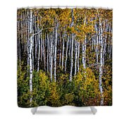 Autumn On Mcclure Pass Shower Curtain
