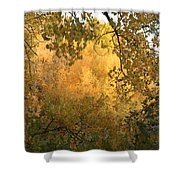 Autumn On The Bosque Shower Curtain