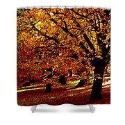 Autumn On Wombat Hill II Shower Curtain