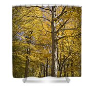 Autumn Orange Forest Colors At Hager Park No.1189 Shower Curtain