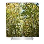 Autumn Pathway Shower Curtain