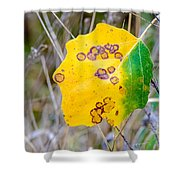Autumn Poplar Leaves Shower Curtain
