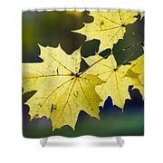 Autumn Rain Shower Curtain