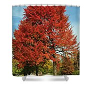Autumn Red Shower Curtain