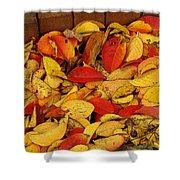 Autumn Remains 2 Shower Curtain