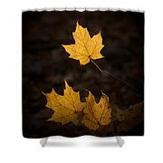Autumn Remnant Shower Curtain