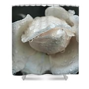 Autumn Roses And Rain Shower Curtain