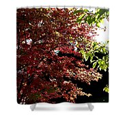Autumn Snowball Bush Shower Curtain