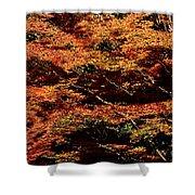 Autumn Solarisation 1 Shower Curtain