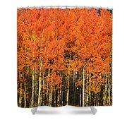 Autumn Splender  Shower Curtain