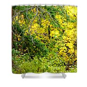 Autumn Splendor 14  Shower Curtain