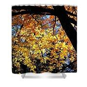 Autumn Splendor 3 Shower Curtain