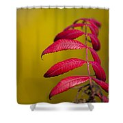 Autumn Sumac Shower Curtain