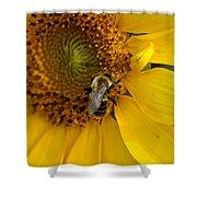 Autumn Sunflower Shower Curtain