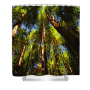Autumn Sunlight Cast On Majestic Green Oregon Old Growth Forest  Shower Curtain