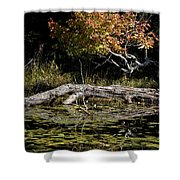 Autumn Swamp Shower Curtain