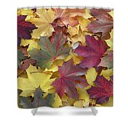 Autumn Sycamore Leaves Germany Shower Curtain