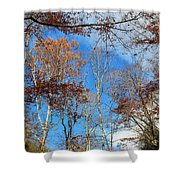 Autumn Trees And Heaven Shower Curtain