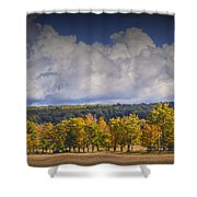 Autumn Trees In A Row Shower Curtain