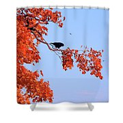 Autumn View Through Red Leaves Shower Curtain